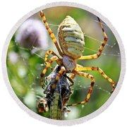 Argiope Spider And Grasshopper Vertical Round Beach Towel