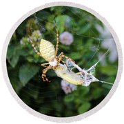 Argiope Spider Top Side Horizontal Round Beach Towel