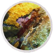 Arrow Crab In A Rainbow Of Coral Round Beach Towel
