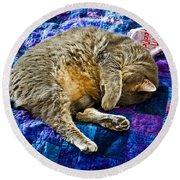 Cat Nap Round Beach Towel