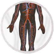 Arteries And Veins Of The Human Body Round Beach Towel
