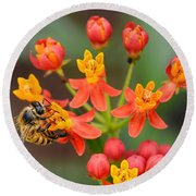 Asclepias Curassavica And Bee Round Beach Towel