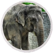 Asian Elephant  0a Round Beach Towel