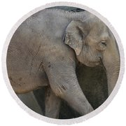 Asian Elephant Round Beach Towel