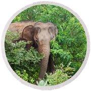 Asian Elephant  Elephas Maximus Round Beach Towel