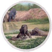 Asian Elephants - In Support Of Boon Lott's Elephant Sanctuary Round Beach Towel