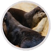 Asian Otters Round Beach Towel