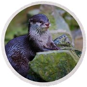 Asian Small Clawed Otter Round Beach Towel