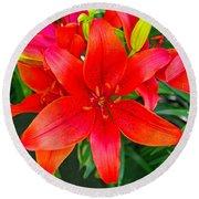 Asiatic Hybrid Lily Round Beach Towel