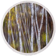 Birch Trees At Lake Maria State Park Minnesota Round Beach Towel