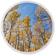 Aspen Trees In The Fall Round Beach Towel