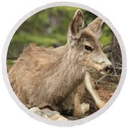 At Rest In The Rockies Round Beach Towel