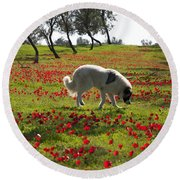 At Ruchama Forest Israel 1 Round Beach Towel