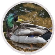 At The Duck Pond V5 Round Beach Towel