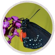 Atala Butterfly Round Beach Towel