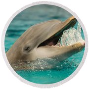 Atlantic Bottlenose Dolphin Round Beach Towel