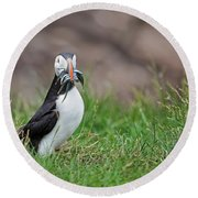 Atlantic Puffin With Sandeels Round Beach Towel