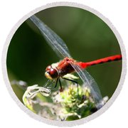 August Dragonfly  Round Beach Towel