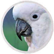 Australian Birds - Cockatoo Up Close Round Beach Towel