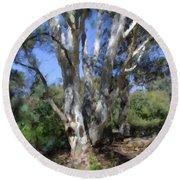 Australian Native Tree 5 Round Beach Towel