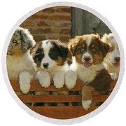 Australian Sheepdog Puppies Round Beach Towel