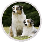 Australian Shepherd Dogs Round Beach Towel