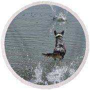 Australian Shepherd Fun At The Lake Chasing The Ball Round Beach Towel