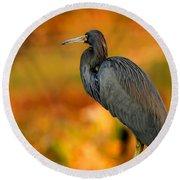 Autumn Blue Heron Round Beach Towel