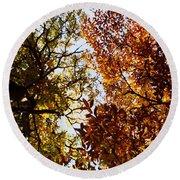 Autumn Chestnut Canopy   Round Beach Towel