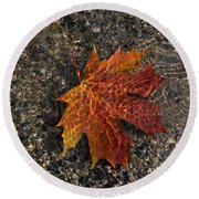Autumn Colors And Playful Sunlight Patterns - Maple Leaf Round Beach Towel