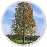 Autumn Cypress Tree Round Beach Towel