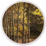 Autumn Forest Scene With Birches In West Michigan Round Beach Towel