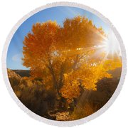Autumn Golden Birch Tree In The Sun Fine Art Photograph Print Round Beach Towel