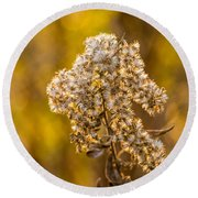 Autumn Goldenrod And A Poser Round Beach Towel