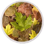 autumn is coming 5 - A carpet of autumn color leaves  Round Beach Towel