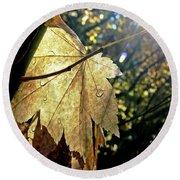 Autumn Light On Leaf Round Beach Towel
