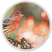 Autumn Male House Finch 1 Round Beach Towel