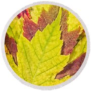 Autumn Maple Leaves Round Beach Towel
