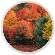 Autumn Maple Trees Round Beach Towel