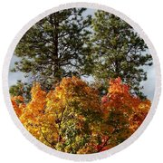 Autumn Maple With Pines Round Beach Towel