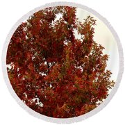 Autumn Oak On A Cloudy Day Round Beach Towel