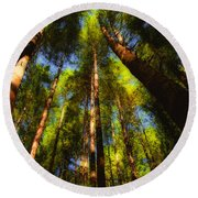 Autumn Sunlight Cast On Majestic Green Oregon Old Growth Forest  Round Beach Towel