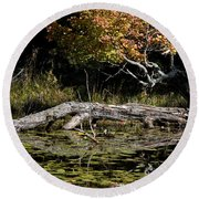 Autumn Swamp Round Beach Towel
