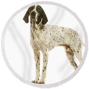 Auvergne Pointer Round Beach Towel