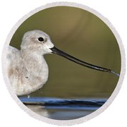Avocet Feeding Round Beach Towel