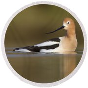 Avocet Looking Back Round Beach Towel