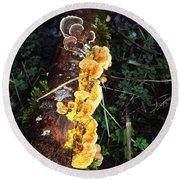 Awe Inspiring Fungi Two Round Beach Towel
