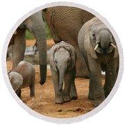 Baby African Elephants II Round Beach Towel