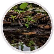 Baby Alligators Reflection Round Beach Towel