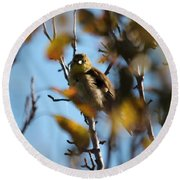 Baby American Goldfinch Learning To Fly Round Beach Towel